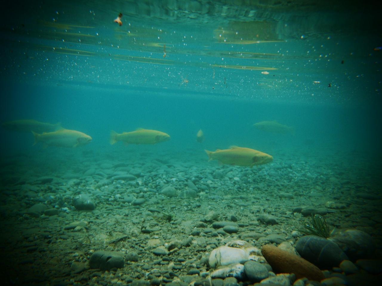 Aguabonita en subaquatique